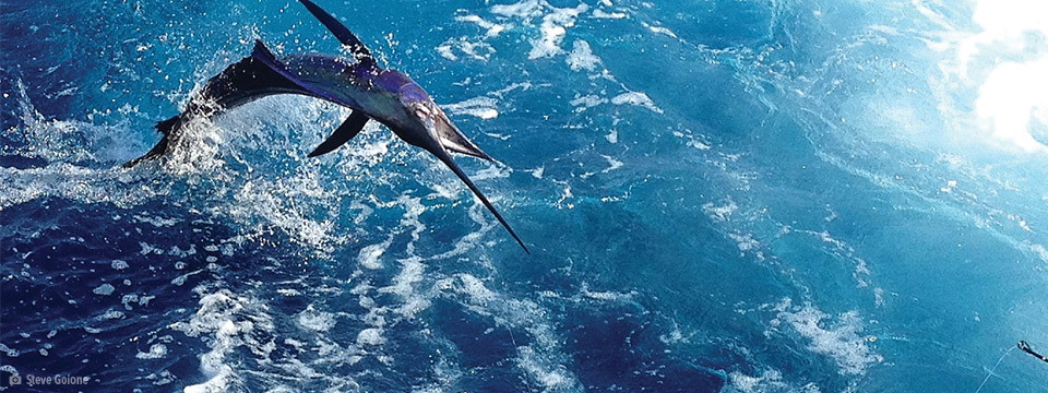 Team Jaruco Dials In On Costa Rican Sailfish