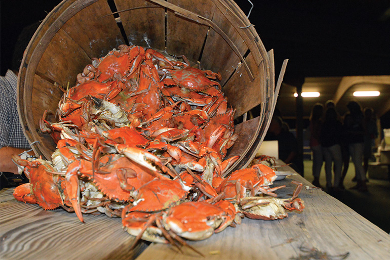Red Eye Crabs